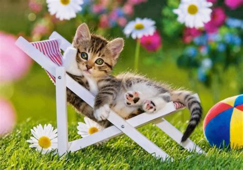 Swings Katze by 10 Top Tips To Keep Your Pets Healthy In Summer Vets
