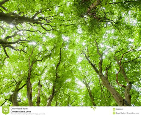 forrest canopy royalty free stock images image 34483589