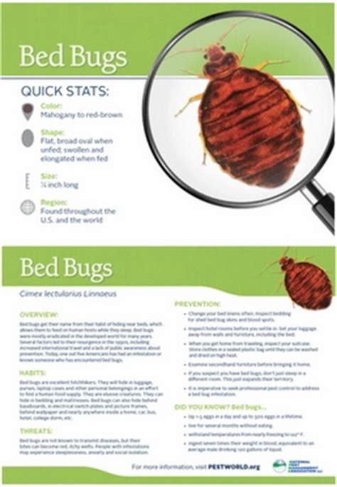 information about bed bugs bed bug facts and pictures bangdodo