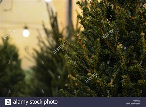 chicago christmas tree lot lincoln square chicago stock photos lincoln square chicago stock images alamy