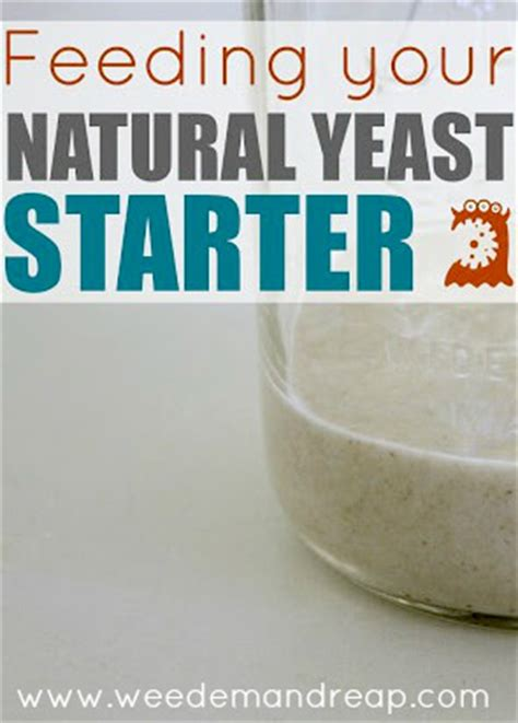 feeding your natural yeast starter weed 'em & reap