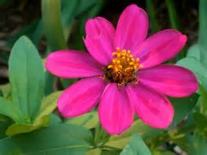 file pinkflower jpg