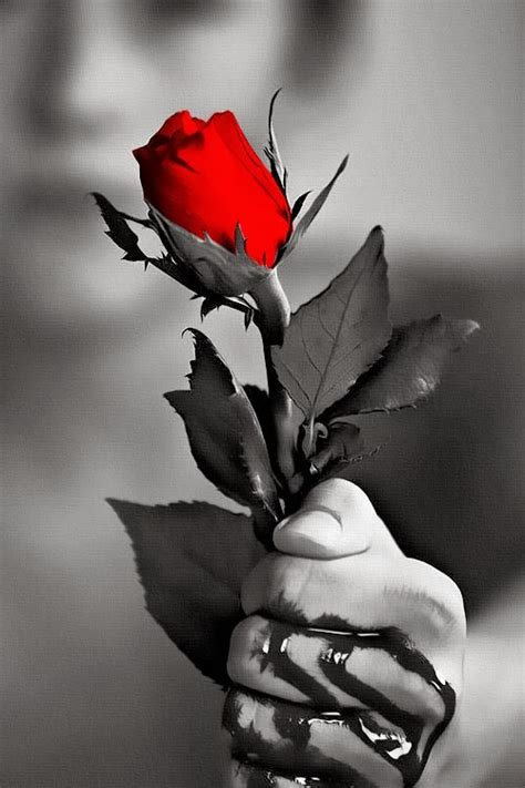 imagens de flores e rosas image gallery linda s imagens de rosas