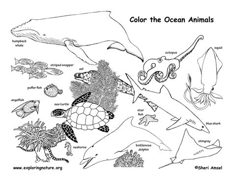 coloring pages of animals in their habitats ocean animals labeled coloring nature