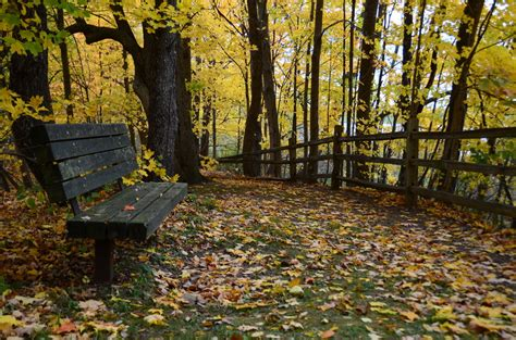 autumn park bench park bench in late autumn by gregnold on deviantart