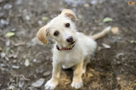 rescue a puppy a few myths about rescue dogs debunked pets4homes