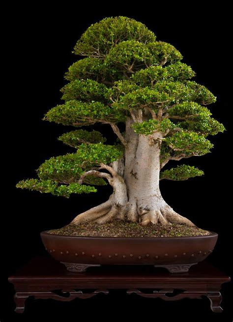 bonsai tree beasts of the southern wild bonsai bark
