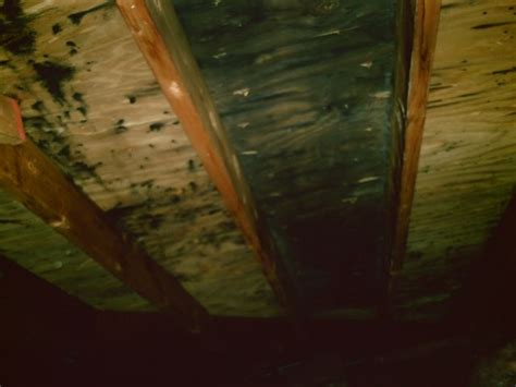 Black Mold In Attic - abc mold removal black mold in attic