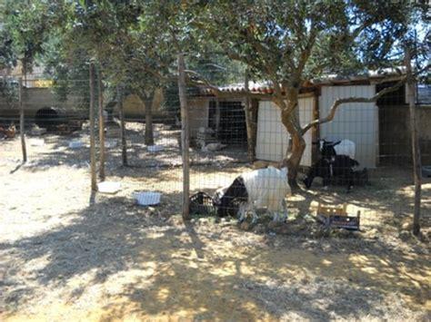 foto animali da cortile animali da cortile foto di baglio carta balestrate