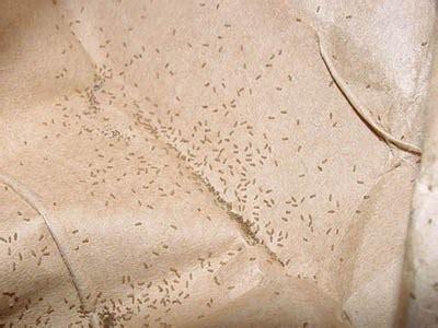 湿気虫 チャタテムシの画像、寿命や卵、生態は? | 家虫対策.net