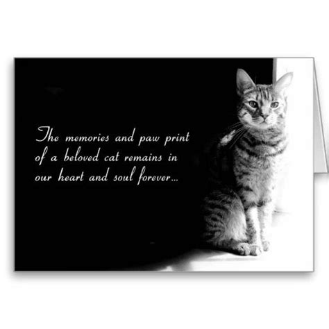 how to comfort a sick cat best 25 pet sympathy quotes ideas on pinterest pet