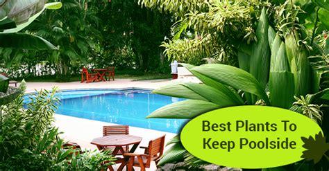 best plants to keep poolside solda pools