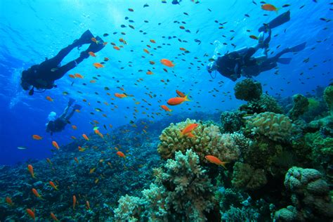 dive trip scuba diving in dahab the why and the how get healthy
