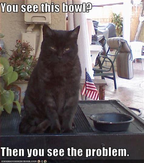 Damn Lol Memes - damn cats are funny animal humor photo 4133528 fanpop