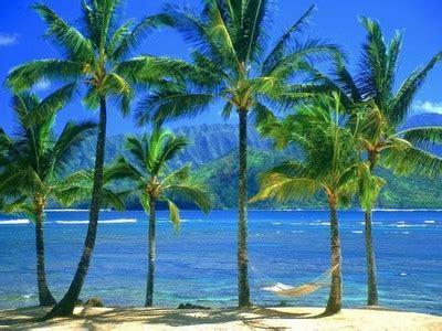 gambar pohon kelapa  pantai hitam putih kartun