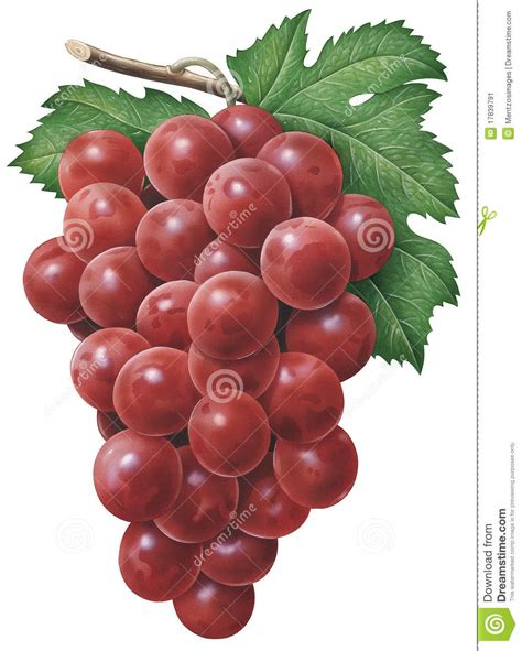 imagenes uvas rojas uvas rojas imagen de archivo imagen 17839791