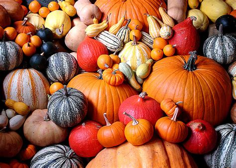 photos pumpkins perfectly palatable pumpkins wings worms and