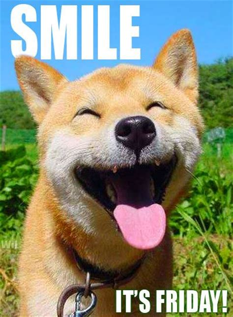 friday puppy smile it s friday friday dogs dagen de week happy to