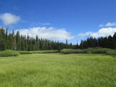 middle perazzo meadow assessment sierra nevada meadows