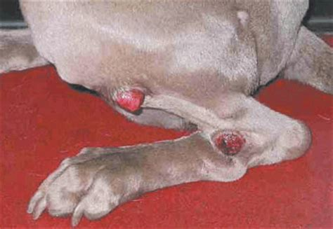 symptoms of cancer in dogs common symptoms of cancer in dogs