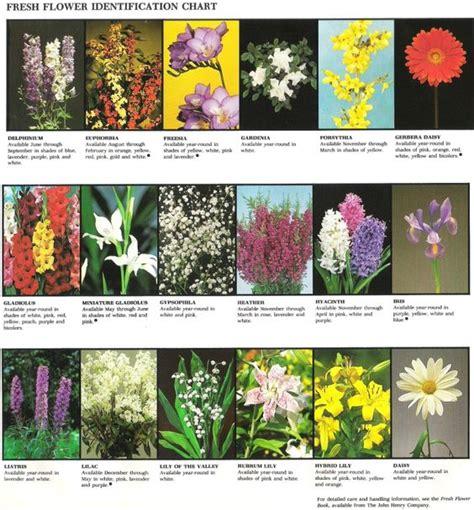 Fresh Flower Identification Chart 2 Name That Flower Garden Flowers Identification