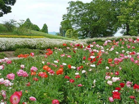 05 picture of ibaraki flower park ishioka tripadvisor
