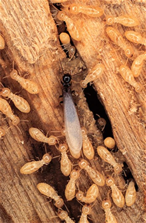 termite resistant structures foundation masters