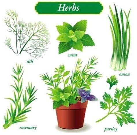 types of garden herbs herbs