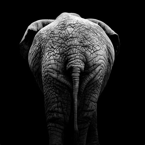 Gamis Black White Dannis No 10 portraits of animals ii on behance