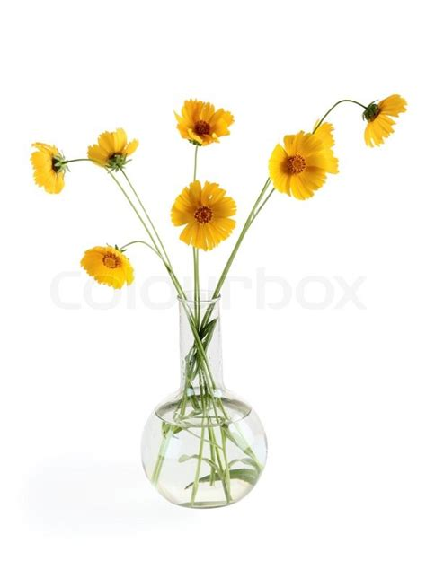 three yellow flowers in a vase white stock photo