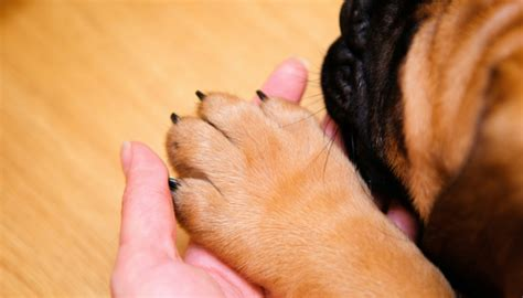 how does a bleed after puppies 5 easy ways to stop your dogs nail from bleeding puppy leaks