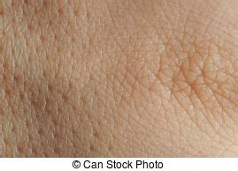 pores on human skin macro up of caucasian skin with holls stock photo royalty free image texture of human skin up macro pictures search photographs and photo clip
