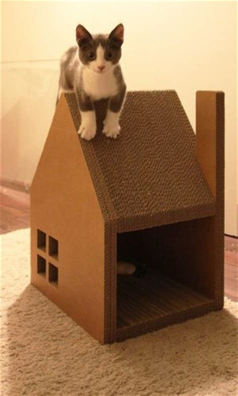 desain rumah kucing  kayu minimalis renovasi