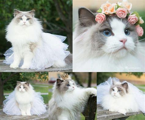 Lu Tidur Jamur Cantik Nan Manja lucunya si kucing cantik yang berdandan ala putri kabar berita artikel gossip