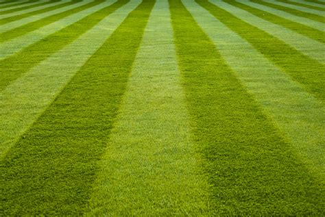 true green landscaping vitastrength there s no such thing as greener grass