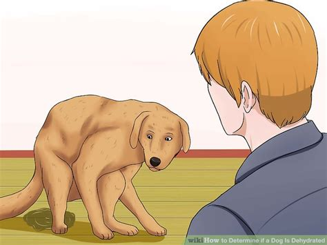 puppy dehydration how to determine if a is dehydrated 9 steps with pictures