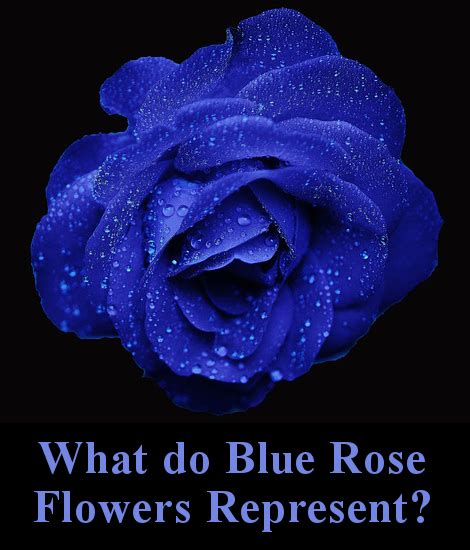 what do the colors of roses all the different colors of roses and their meanings