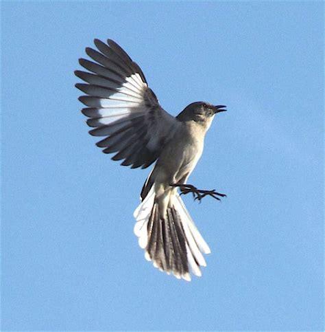 eminem mockingbird meaning eminem mockingbird lyrics review and song meaning