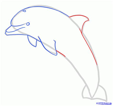create drawings how to draw a jumping dolphin step by step sea animals