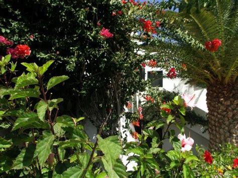 tropischer garten kanaren urlaub ferienhaus appartments tropischer garten