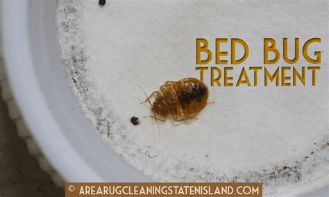 professional bed bug treatment area rug cleaning staten island 20 off all cleaning