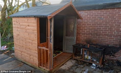 Do Pigs Shed by Arsonists Destroy Sensory Room Built As A Present To Help Severely Autistic Boy