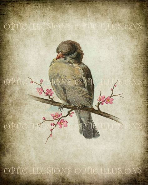 printable digital picture vintage bird illustrations on