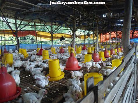 Jual Bibit Ayam Broiler Di Bekasi jual ayam broilerjual ayam broiler page 5 jual ayam