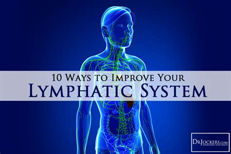 8 Ways To Improve Your Circulation by 10 Ways To Improve Your Lymphatic System Drjockers