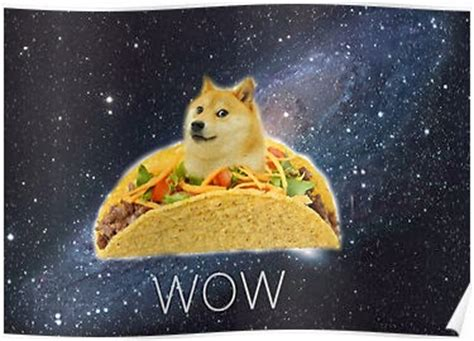 Doge Meme Tumblr - jimmyfungus com the best of doge the absolute best of