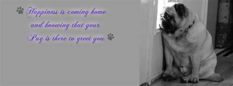 pug cover photo pug pug quotes and cover photos on