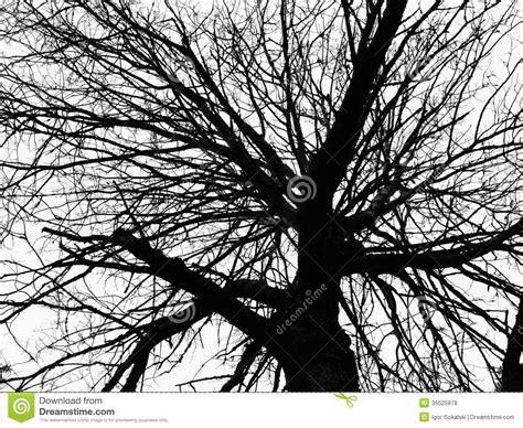black and white tree pattern tree silhouette royalty free stock photos image 35525878