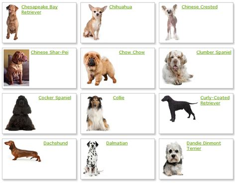 types of dogs how many breeds of dogs are there in the world dog breeds