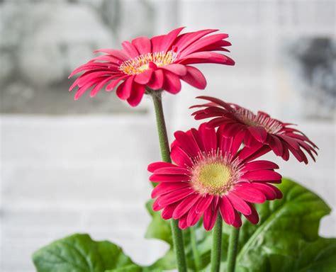 Fleurs De Printemps by Photo Gratuite Fleur Printemps 201 T 233 Jardin Image